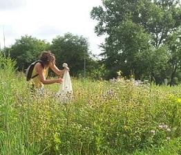 Vera Pfeiffer catching bumblebees